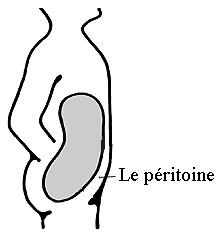 SPCF.FR : Le péritoine du corps humain