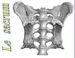SPCF.FR : Le sacrum du corps humain