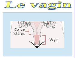 SPCF.FR : Le vagin du corps humain